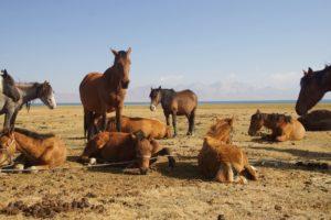 Pferde am Songköl von Pixabay